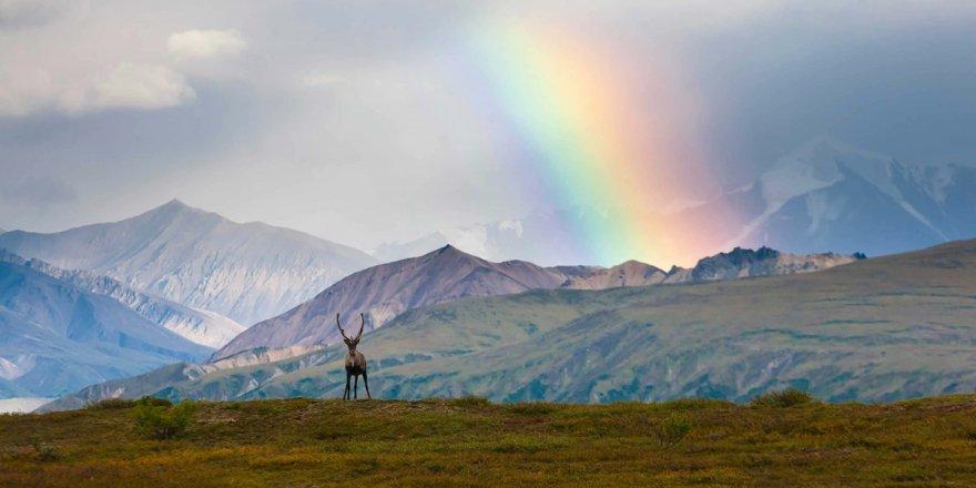 Alaska'da 'ilk Amerikalıların' DNA'larına ışık tutacak keşif