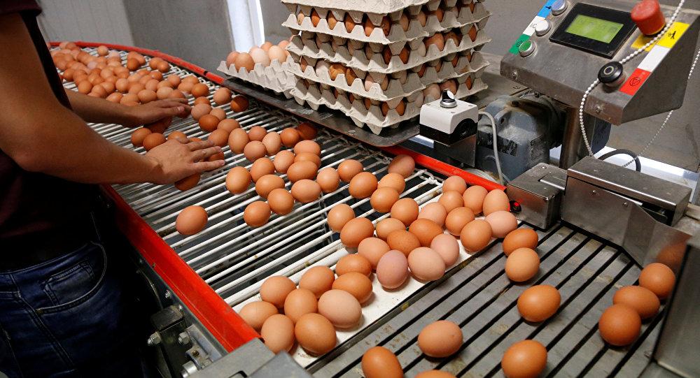 YUM-BİR: Yumurtanın besin değerinde herhangi bir farklılık bulunmaz