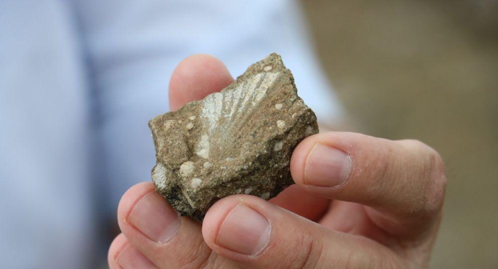 Sivas'ta deniz canlılarına ait fosiller bulundu
