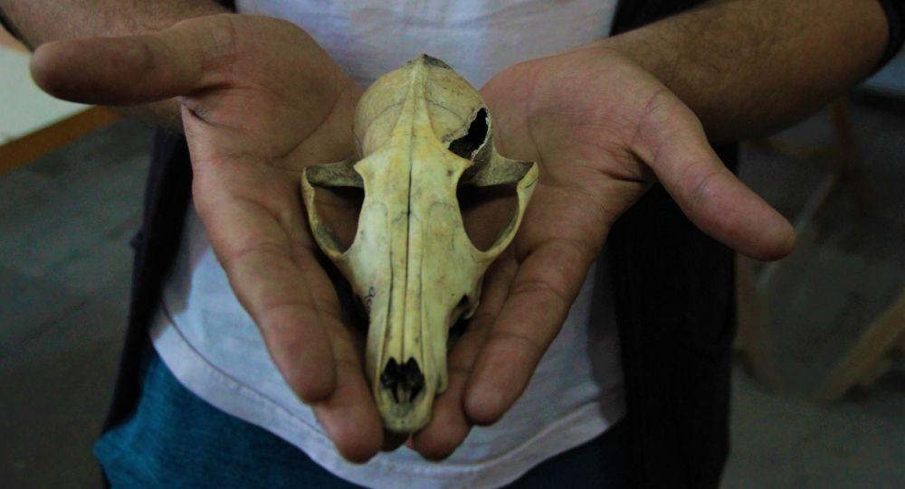 Arkezoolog Gündem, Eskişehir'deki kazılar hakkında bilgi verdi