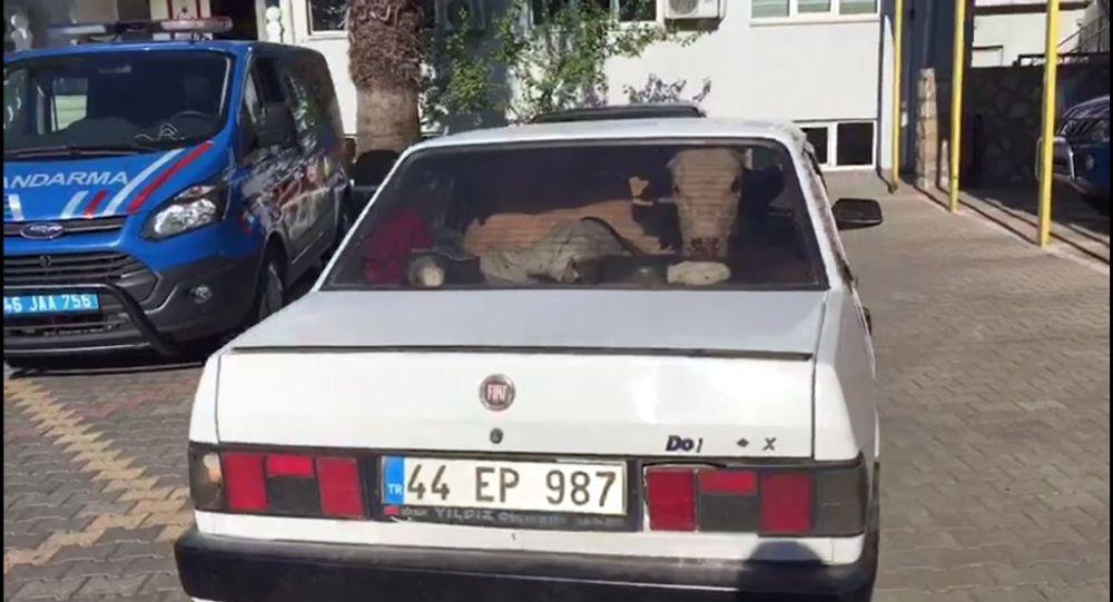 Dur ihtarına uymayan araçtan çalıntı inek çıktı
