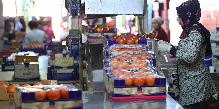 Rusya Türkiye'den domates ithalatını arttırabilir