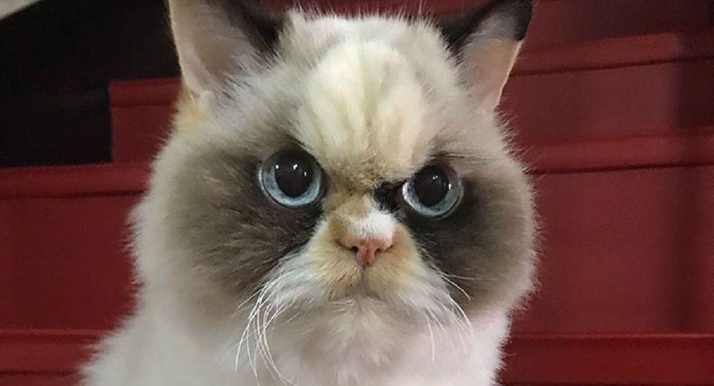 Yeni 'Huysuz Kedi' Tayvan'dan çıktı