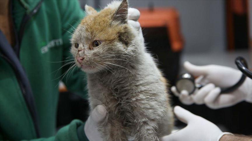 İkinci vaka: Hong Kong'da bir kediye sahibinden koronavirüs bulaştı