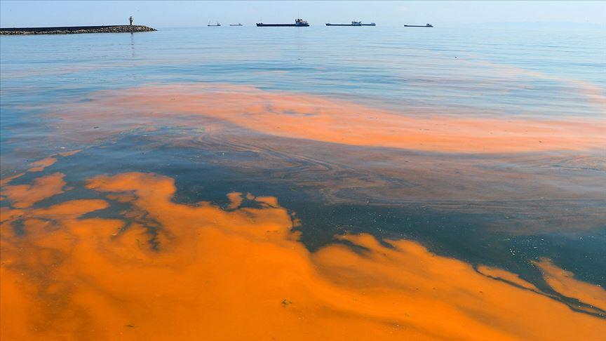 Marmara Denizi'nde plankton çoğalması