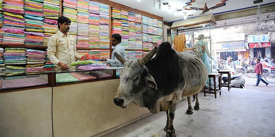 Hindistan'da inek kaçakçısına linç girişimi